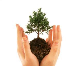 ۱۵ اسفند، آغاز هفته منابع طبیعی و روز درختکاری در شهرستان سوادکوه شمالی