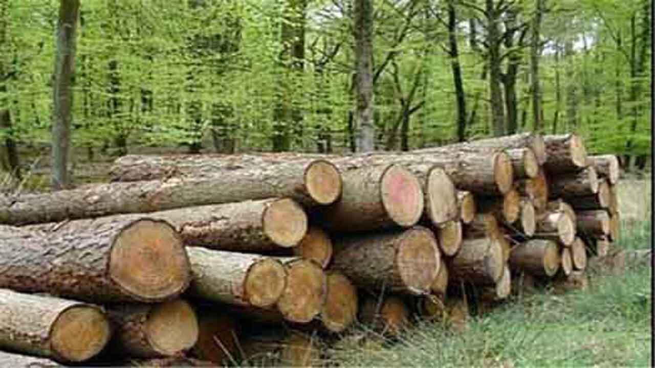 توقیف ۳ خودروی حامل چوب قاچاق در سوادکوه شمالی
