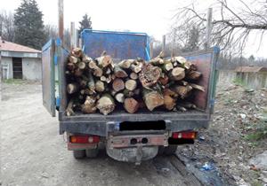 کشف و ضبط ۱۵ تن چوب قاچاق در سوادکوه شمالی