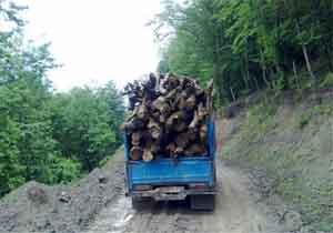 کشف و ضبط بیش از ۴ تن چوب قاچاق در سوادکوه شمالی