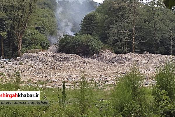 رویش جنگل زباله در مچه بن شیرگاه