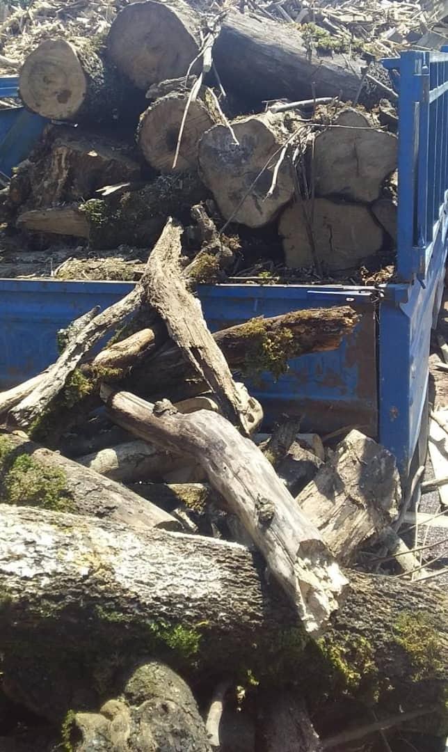 کشف و ضبط ۱٫۲ تن چوب قاچاق در سوادکوه شمالی